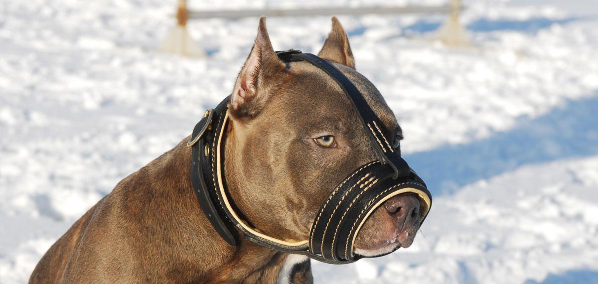 Bozales de metal, cuero y plástico para razas caninas